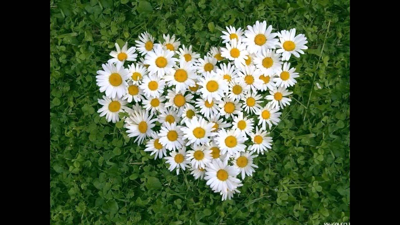 Любовь-это (детская валентинка)  ;) ;) ;)