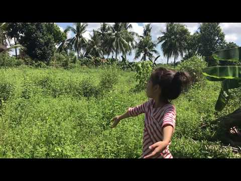 🌾Philippines Province Lots of Butterflies🦋 Trip with Tatay Juanito [PART 1]