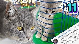 Кот Макс начинает спасение кошки Матильды. Как найти котенка? Серия 11