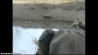 RPA / Afryka - wodopój