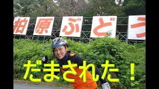 ロードバイクでぶどう狩り?!大阪のヒルクライム名所で何が起こったのか?