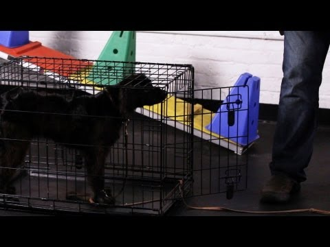 How to Teach Your Dog to Go to His Crate | Dog Tricks