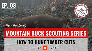 HOW TO HUNT TIMBER CUTS | Mountain Buck Scouting Series