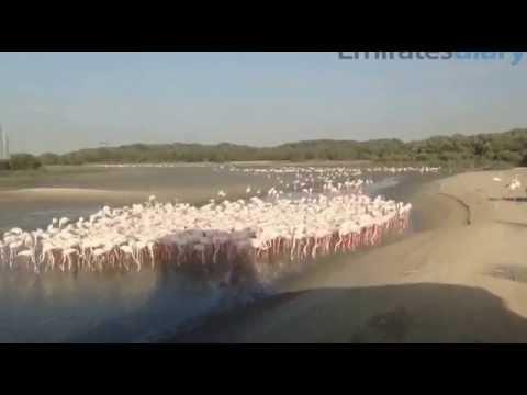 Ras Al Khor Wildlife Sanctuary Dubai – Timelapse