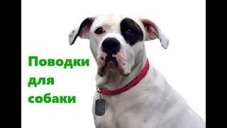 Поводки Для Собак & Какой Выбрать Поводок Для Собаки. Ветклиника Био-Вет