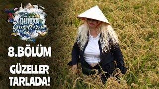 Dünya Güzellerim pirinç tarlasında çalışmaya başlıyor!