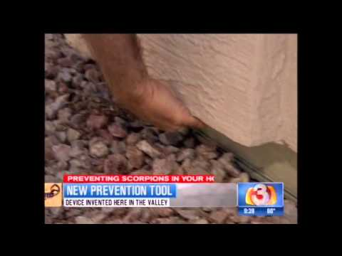 Pest Borders Scorpion Pest Control Channel 3 news Scorpion Pest Control