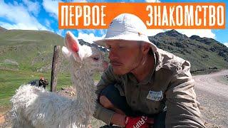 По дороге к Радужным горам | Путешествие по Перу | #19