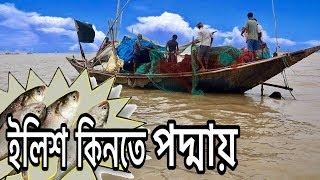 জেলে নৌকা থেকে পদ্মা নদীর তাজা ইলিশ কেনা || Buying Hilsa in The Padma River