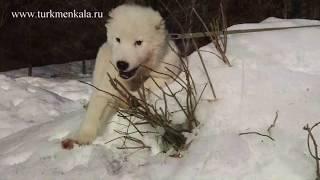 Как отучить щенка грызть садовые растения