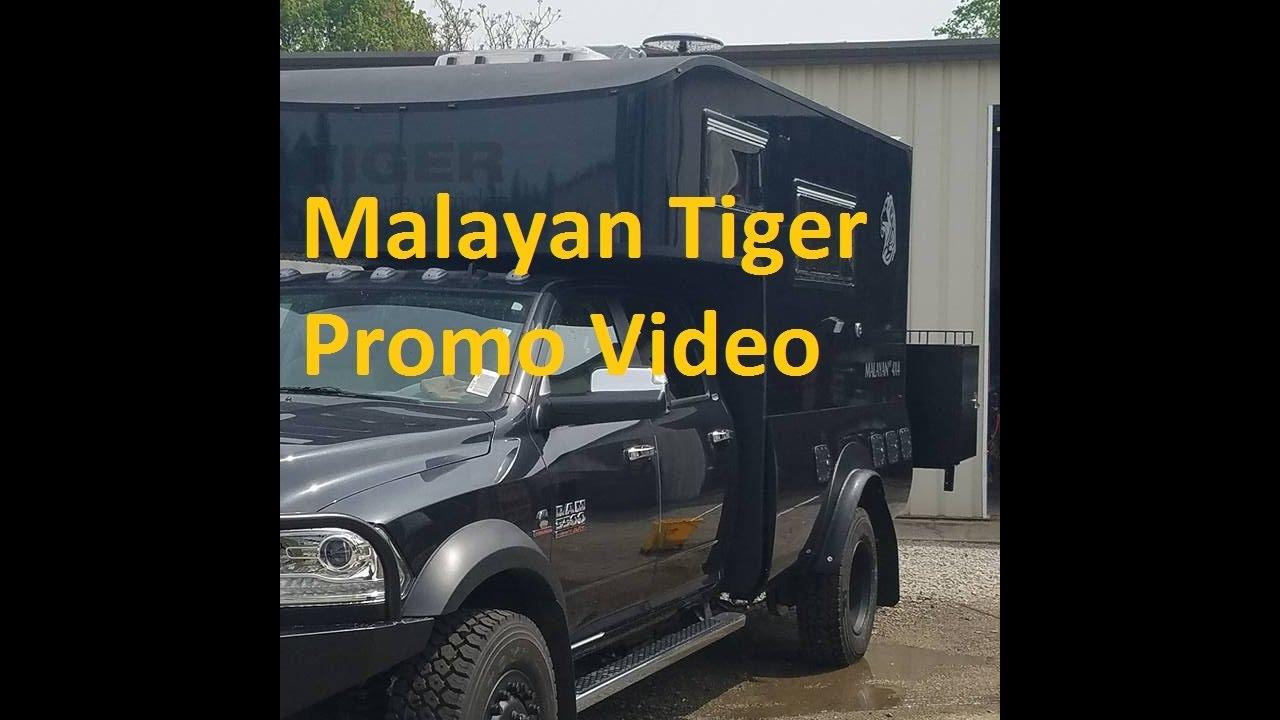 Tiger Malayan Rv Youtube