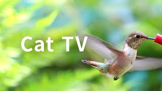 Cat TV 2020: 5 Hours Hummingbirds. Beautiful Birds for Cats to Watch. Nature Sounds