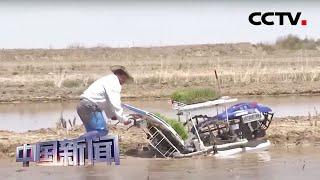 [中国新闻] 青海:柴达木盆地盐碱地开始试种海水稻 | CCTV中文国际