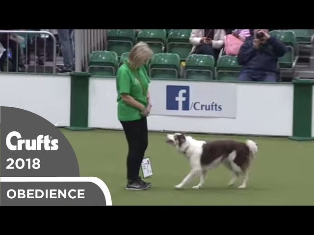 Inter-Regional Rally - Level 4 - Part 7 | Crufts 2018