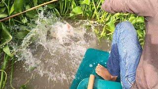 เจออีกแล้วปลากดคังแห่งล้ำน้ำน้อย มุดเข้าไต้กอผักตบคันถึงกับหัก / ต้อม คนทำมาหากิน