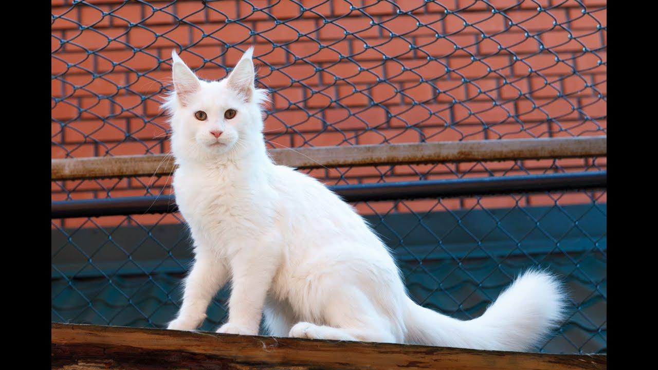 Жена без ПРЕДУПРЕЖДЕНИЯ принесла в дом нового котенка домашней .