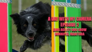 IAMS AGILITY DOG SHOW AT RED RIVER EXHIBITION PARK, WINNIPEG, MANITOBA- EPISODE 2