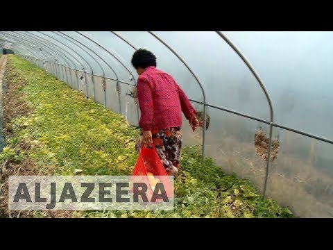 South Korea farmers fear toxic effects of anti-missile defence system