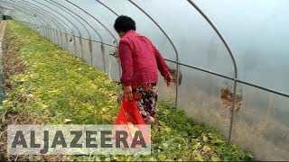 South Korea farmers fear toxic effects of anti-missile defence system thumbnail