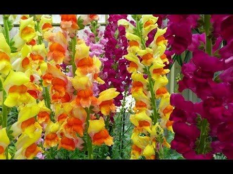 ♥ Самые красивые цветы в мире ♥