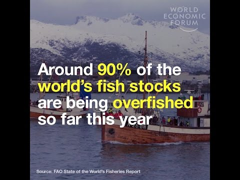 Around 90% Of The World's Fish Stocks Are Being Overfished