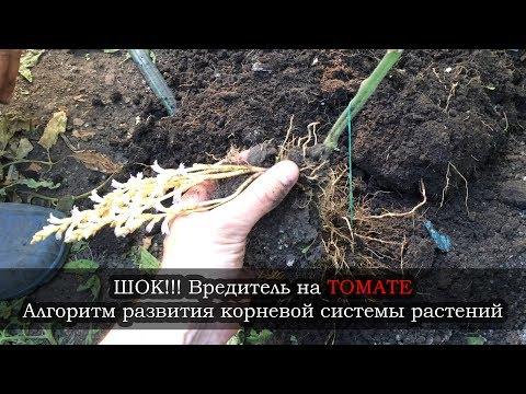 Рокарий в саду своими руками устройство, схема, фото