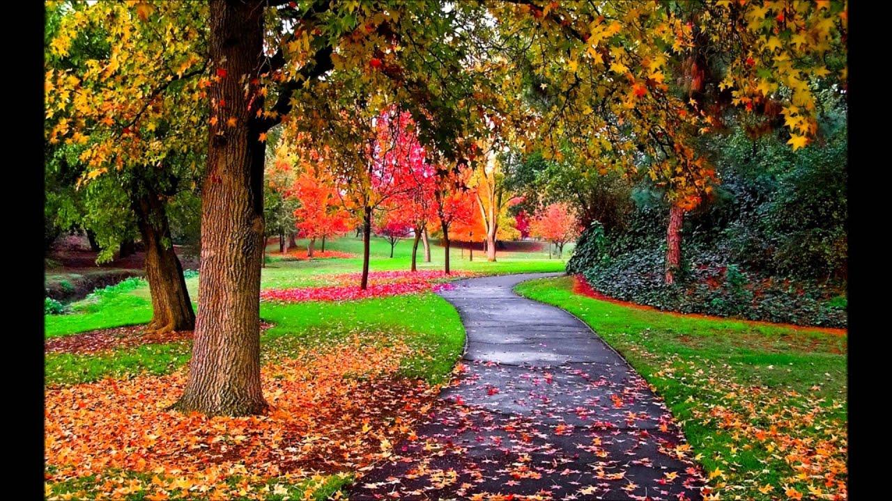 Autumn s concerto wallpaper - Autumn S Concerto Wallpaper 67