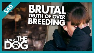 Heartbreaking Consequences of Dog Overbreeding |  It's Me or The Dog