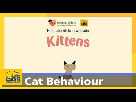 The African Wildcat: kittens - Cats Protection's cats for kids