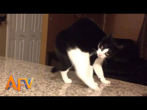 101 SUPER Weird Cats | AFV Funniest Cat Videos 2018