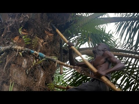 LANDGRABBING: How Farmers in Sierra Leone are losing their Land to foreign Investors