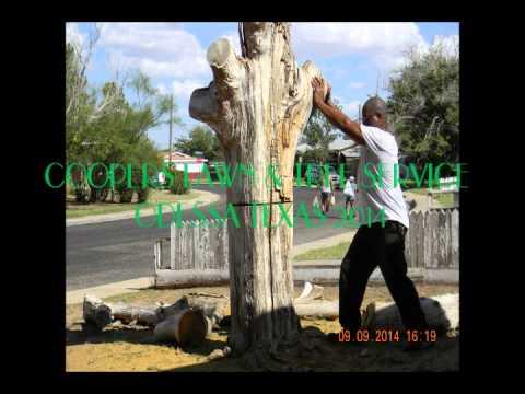 TREE SERVICE ODESSA TEXAS  - #432-653-1729