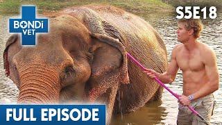 bondi-vet-visits-thailand-s05e18-bondi-vet