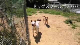 出産経験のあるメス犬はパニック等のリハビリに適してるんです! 驚きま...
