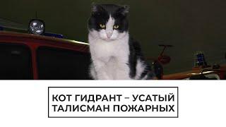 Кот Гидрант   талисман пожарных