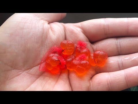 How To Rig And Fish With Salmon Eggs