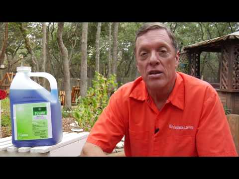 Lawn Care Tips How To Get Rid Of Poison Oak Poison Ivy
