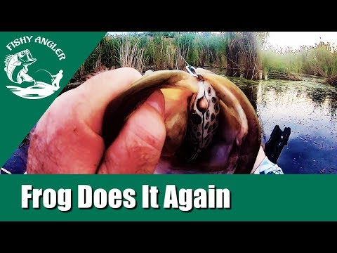 Frog Fishing For Big Bass In Delaware.