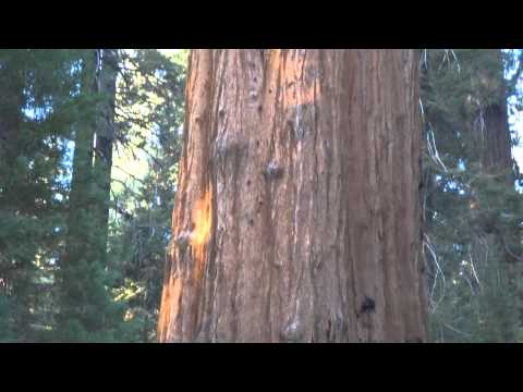General Sherman tree in Sequoia National Park