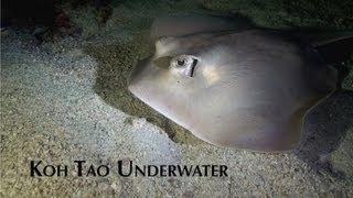 Koh Tao Underwater Video