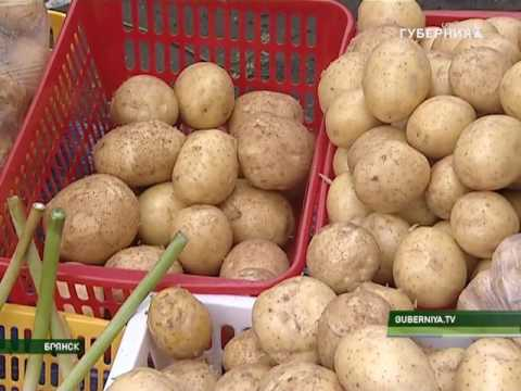 Картофель семенной в кисловодске. Высокие сорта картофеля. Исследование семенного картофеля и его селекция.