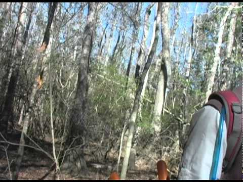 Florida Trail: Over Water and Roots,  Meauring for Infrastructure, larger size