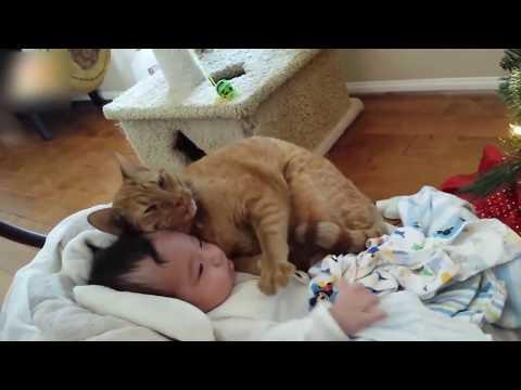 【猫と赤ちゃん】赤ちゃんと添い寝し、赤ちゃんをあやす猫に胸キュン!ほっこり動画まとめ【可愛い】Sweet cat and baby compilation