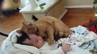 猫 赤ちゃん