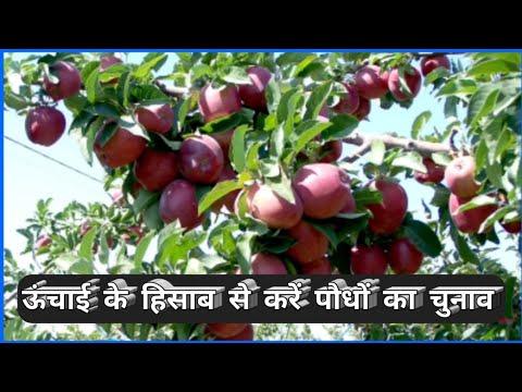 Apple Variety According to Elevation  HIMALAYAN FARMING  Updates
