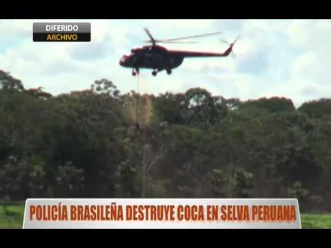 Policía brasileña destruye plantíos de coca en selva peruana