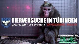 TIERVERSUCHE IN TÜBINGEN - Grundlagenforschung: Grundlegend falsch // SOKO TIERSCHUTZ e.V.