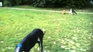 犬種がわからない足の速そうな犬にボーダーコリー、ホワイトシェパード...