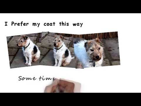 Dog Grooming 101|dog insurance |dog grooming|dogs id tags|dog food|dog pictures|reliable dog breed