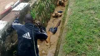 Nigeria army screening test... No one go for army